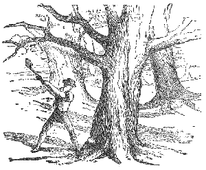 Trees-and-axe